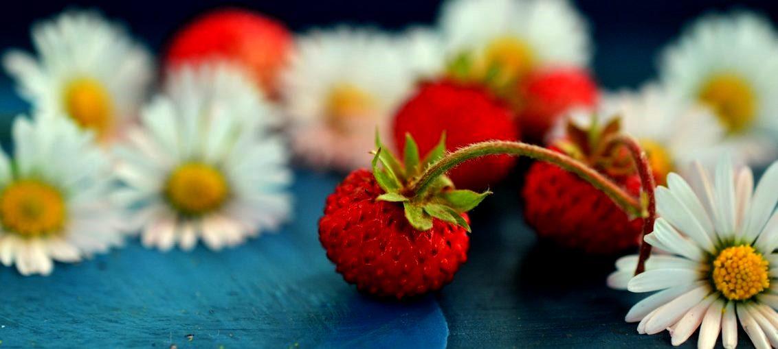 Ljekovitost bobičastog voća