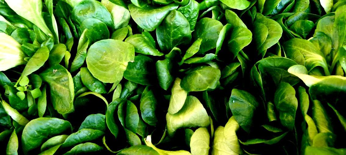 Svježa salata za zimske dane