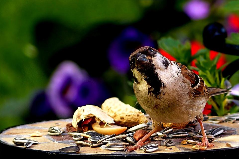 Zašto je toliko važno zimi hraniti ptice?