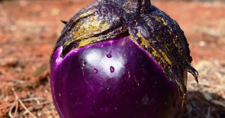 Patlidžan, biljka koja voli toplinu