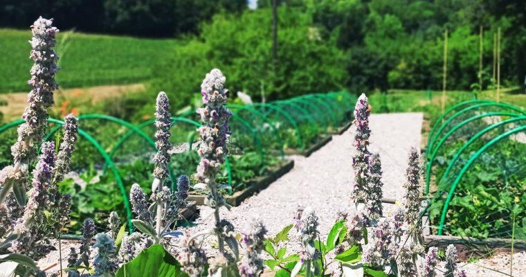 Vrtlarim uz PEVEX – uređenje povrtnjaka